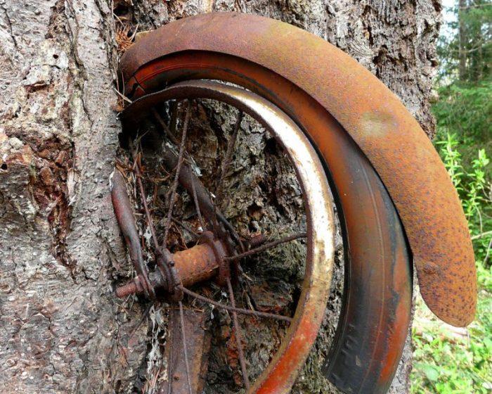 Το δέντρο που μεγαλώνει με ένα ποδήλατο στα «σπλάχνα» του....  !
