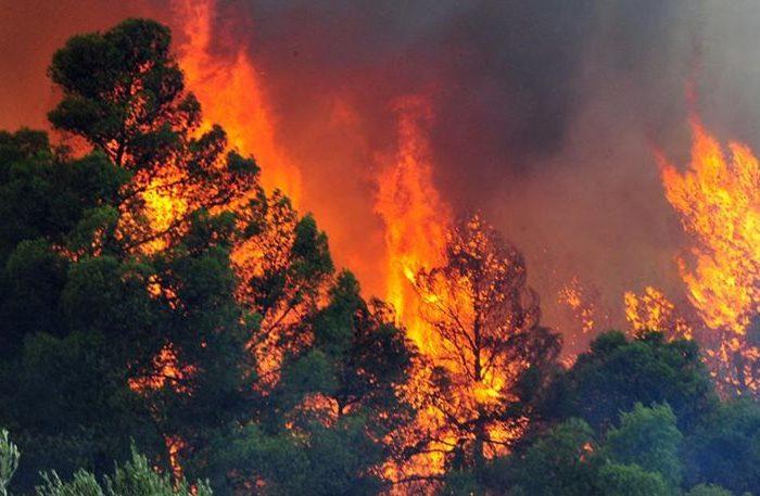 Άρχισαν τα «όργανα» : Φωτιά από εμπρησμό  στο Κοντοδεσπότι μέσα στο χωριό !