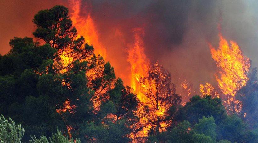 Άρχισαν τα «όργανα» και εδώ: Φωτιά από εμπρησμό  στο Κοντοδεσπότι μέσα στο χωριό !