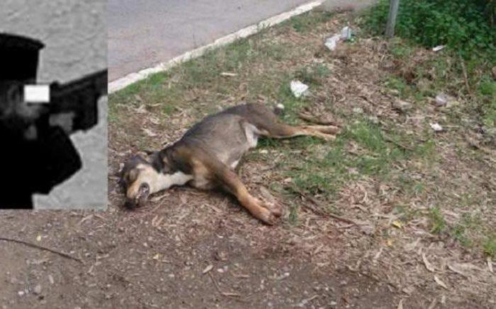 Μεσσηνία: Παππάς κρέμασε τον σκύλο του και τον εκτέλεσε με καραμπίνα (video)