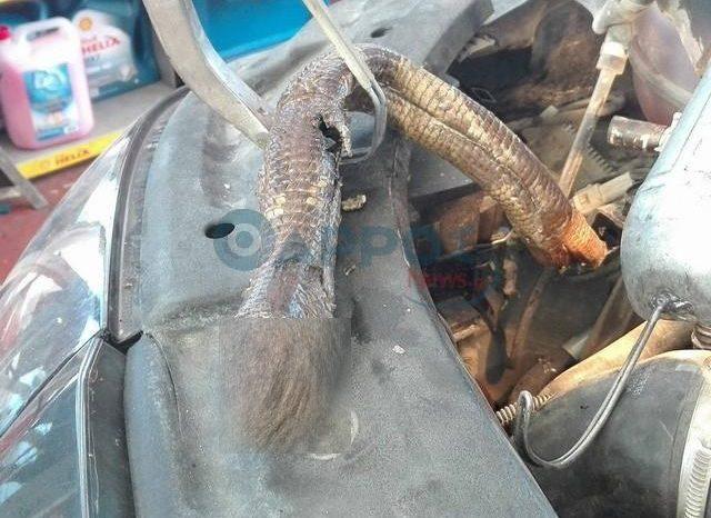 Φίδι διέλυσε τη μηχανή αυτοκίνητου στην Καλαμάτα [pics]