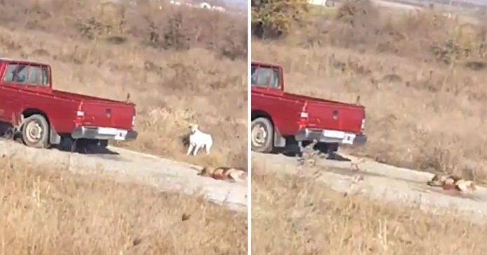Οδηγός αγροτικού στην Λαμία έσερνε σκύλο στο δρόμο με σχοινί (video)