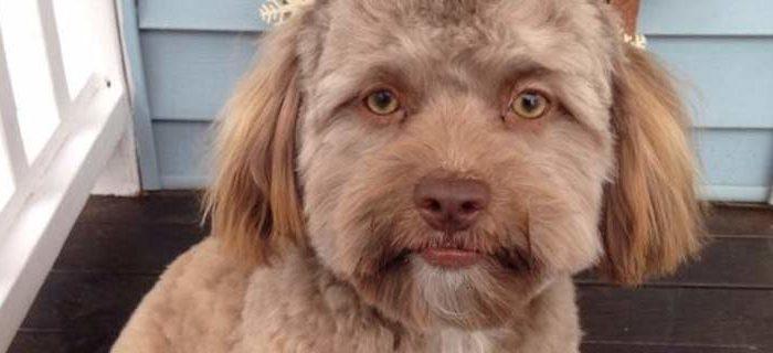 Αυτός είναι ο σκύλος που μοιάζει με άνθρωπο και ταράζει το διαδίκτυο (φωτό)