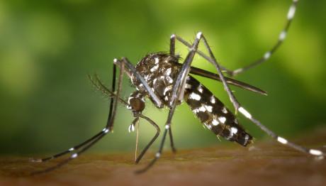 Νέα κρούσματα  από τον ιό του «Δυτικού Νείλου»