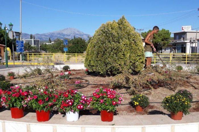 Με πρωτοβουλία του νέου Προέδρου Ψαχνών Μιχάλη Καλαβρή  καθαρίστηκε ο κόμβος στην γέφυρα των Ψαχνών και τοποθετήθηκαν λουλούδια