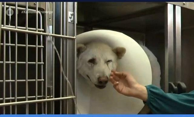 Σκληρές εικόνες: Bίντεο από τον βασανισμό του σκύλου στη Νίκαια