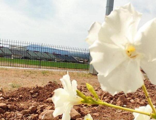Λουλούδια στο Δημοτικό στάδιο Ψαχνών φύτεψε η ΔΗΚΑΔΙΜΕ